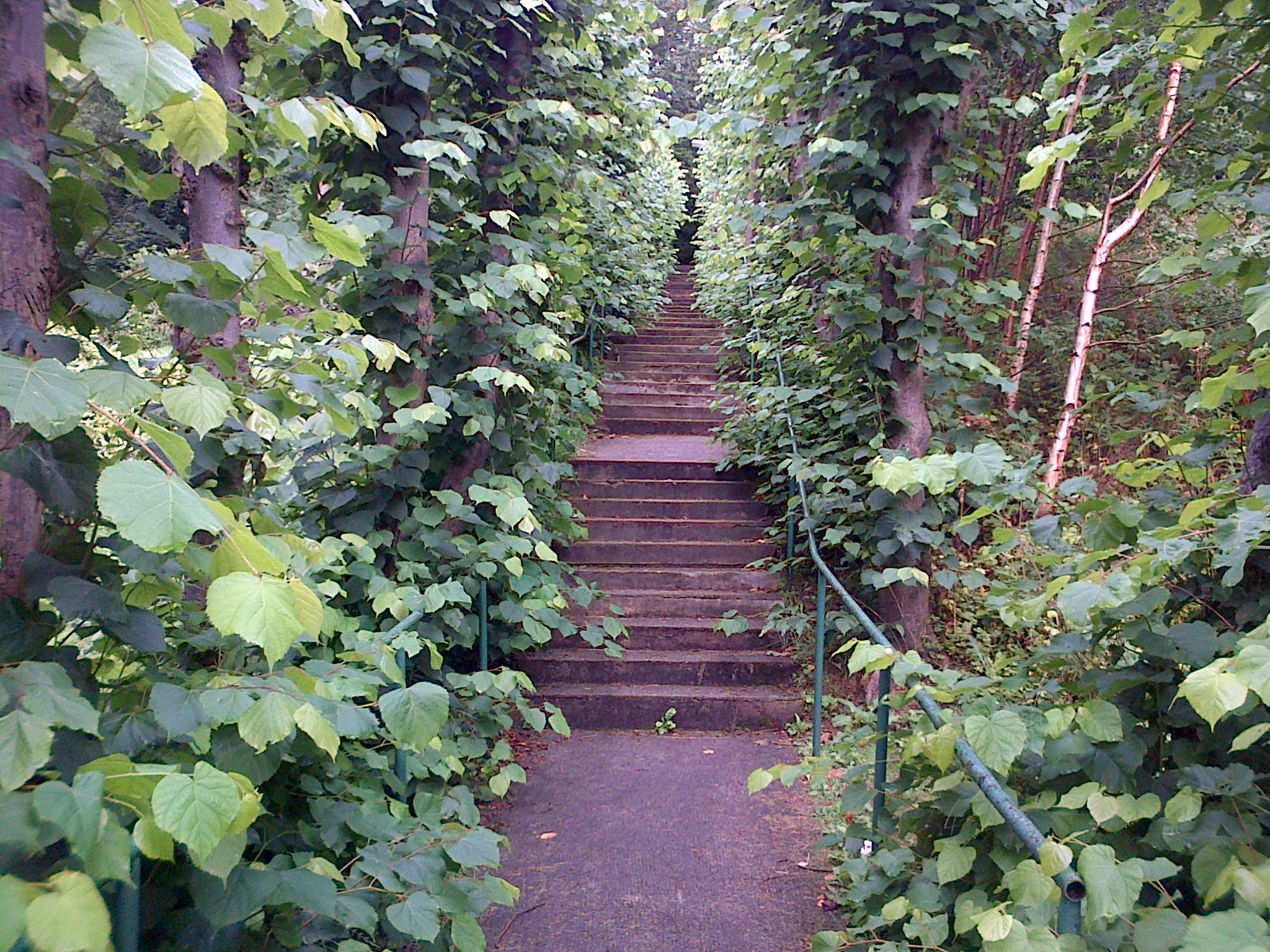 Steps to accommodation